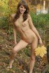 amateur photo Big leaf