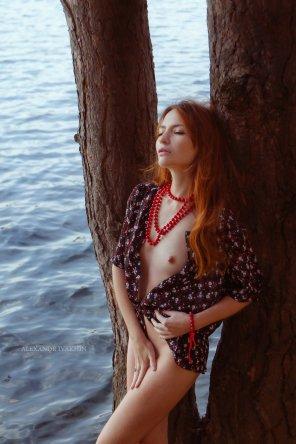 amateur photo Pines, sea and tit