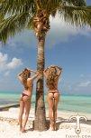 amateur photo Perfect palm