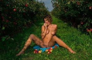 amateur photo Apples