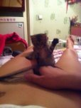 amateur photo Playing with her kitty