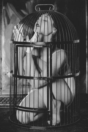 amateur photo Bird cage
