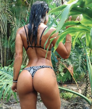 amateur photo In the jungle