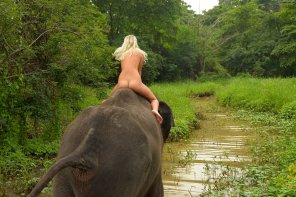 amateur photo Naked Girl On An Elephant