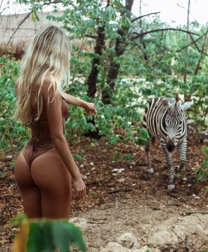 amateur photo Zebra friend