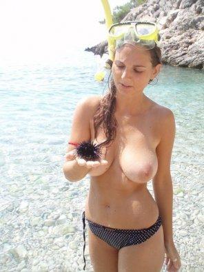 amateur photo Sea urchin
