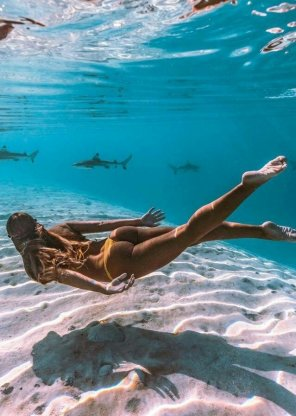 amateur photo Swimming with sharks