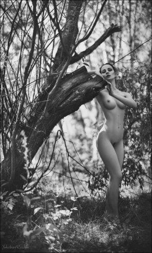 amateur photo Broken branches