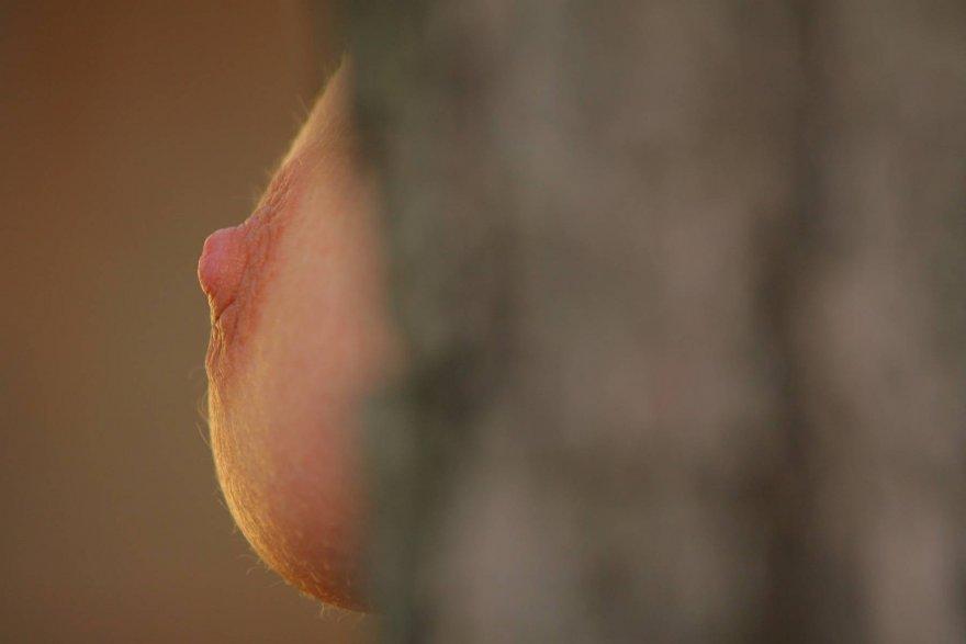 Simply nipple Porn Photo