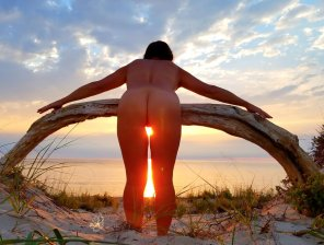 amateur photo Dri[f]twood at Sunset 🌹