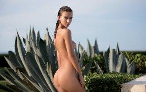 amateur photo Classic Cacti