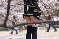 among sakura