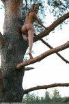 amateur photo Tree climber