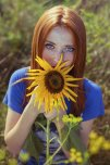 amateur photo Sunflower