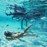 amateur photo Swimming with the sharks