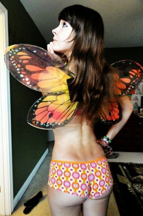 amateur photo butterfly wings