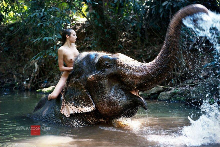 Elephant Xxx