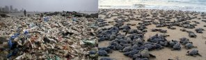 amateur photo After a 3 year long community clean-up. Versova beach, Mumbai