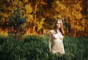 amateur photo Tall grass