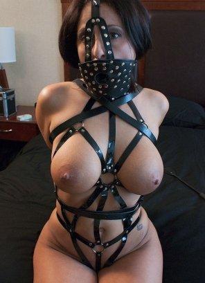 amateur photo harness