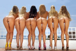 amateur photo They are waiting for you