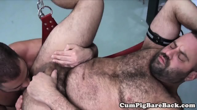 Chubbybear rimmed while lying in a sex swing
