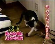 Breast feeding a Cat - scene 1