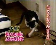 Breast feeding a Cat - scene 3