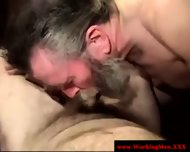 Hairy Gaystraight Bears Sucking Dick