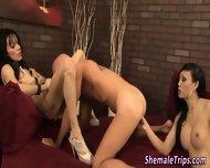 Ladyboy And Tgirl Rimmed - scene 7