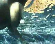 Underwater Tit Mania - scene 12